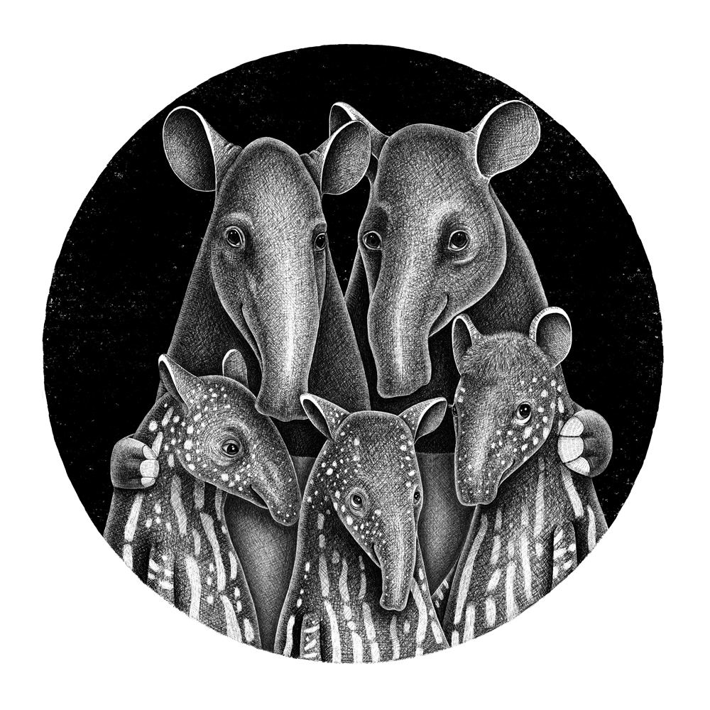 Black and White Pencil Illustration of tapir family