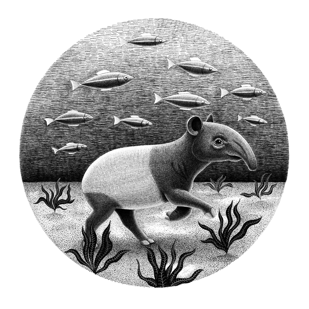 Black and white pencil illustration of a tapir walking underwater