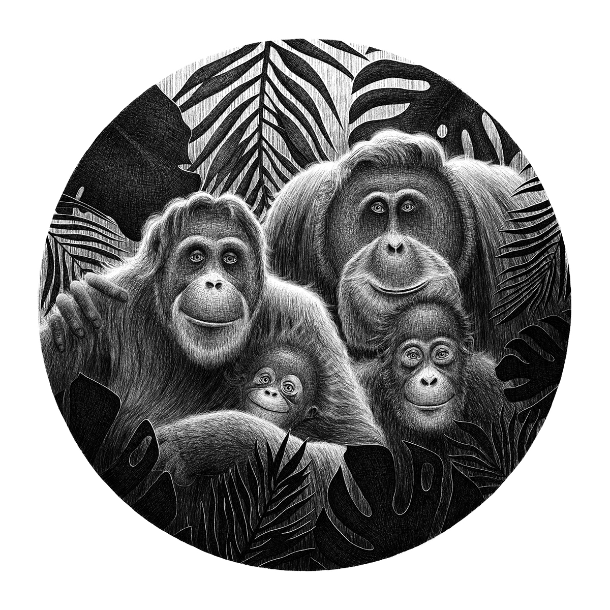 orangutan family black and white illustration endangered animals lucia eggenhoffer illustrator